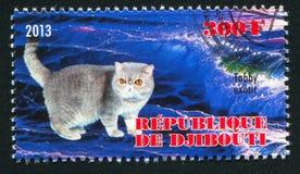Tabby exotic cat. DJIBOUTI - CIRCA 2013: stamp printed by Djibouti, shows Tabby exotic cat, circa 2013 stock photos