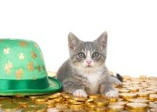 Tabby figlarka na złocistych monetach obok leprechaun kapeluszu Zdjęcie Royalty Free