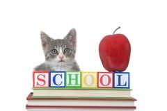 Tabby figlarka z z powrotem szkoła bloki, książki, jabłko Obrazy Royalty Free