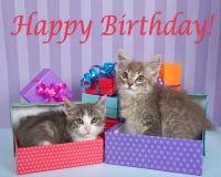 Tabby figlarki w prezentach urodzinowych Obraz Stock