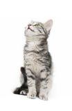Tabby-gato fotografía de archivo