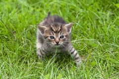 Tabby in the grass Stock Images