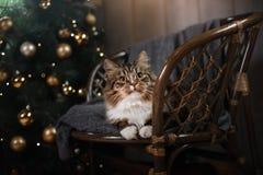 Tabby and happy cat. Christmas season 2017, new year. Holidays and celebration Stock Photos