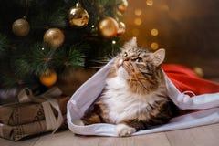 Tabby and happy cat. Christmas season 2017, new year. Holidays and celebration Royalty Free Stock Image