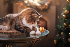 Tabby and happy cat. Christmas season 2017, new year, holidays and celebration. He plays with a Christmas toy Royalty Free Stock Photography