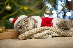 Tabby and the happy cat. Christmas season 2018, new year, holidays and holidays stock image