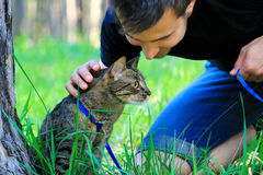 Tabby house cat first time outdoors on a leash and its owner. Scared nervous tabby domestic pet cat first time walking outside on a leash with its male owner Royalty Free Stock Photo