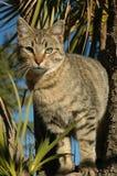 Tabby-Kätzchen im Baum Stockfotos