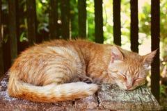 Tabby kat van de gember Royalty-vrije Stock Afbeeldingen
