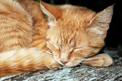 Tabby kat van de gember Royalty-vrije Stock Fotografie