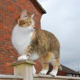 Tabby kat van de gember op tuinomheining Royalty-vrije Stock Fotografie