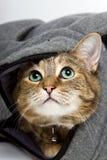 Tabby-Katze Lizenzfreie Stockbilder