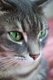 Tabby-Katze Stockfoto