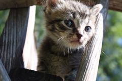 Tabby Kitten Stockbild