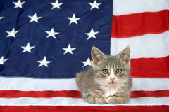 Tabby kitten on American flag royalty free stock photo