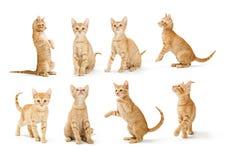 Tabby Kitten arancio sveglia nelle posizioni differenti fotografia stock libera da diritti