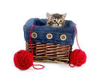 Tabby kitten in a basket Stock Photography
