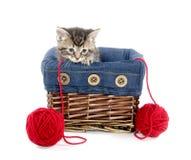 Tabby kitten in a basket Stock Photo