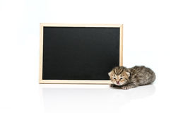 Tabby kitten with black board on white background Stock Photography