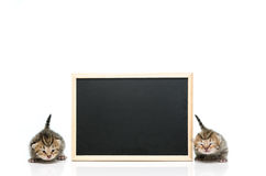Tabby kitten with black board on white background Royalty Free Stock Photos