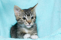 Tabby kitten on blanket Royalty Free Stock Photography