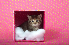 Tabby kitten in  a box Royalty Free Stock Images