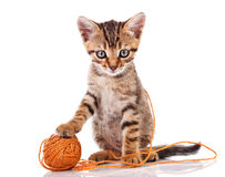 Tabby kitten with brown ball Stock Images