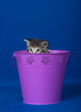 Tabby kitten in bucket Stock Photography