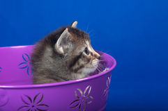 Tabby kitten in bucket Stock Photo