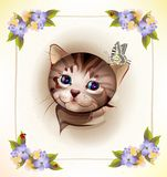tabby kitten and butterfly Royalty Free Stock Photography