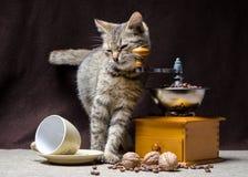 Tabby kitten and coffee stock photos