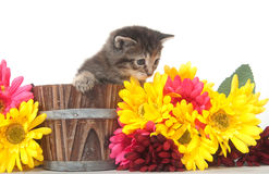 Tabby kitten and colorful flowers Stock Photos