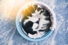 Tabby kitten. Cute tabby kittens sleeping and hugging in a basket Stock Photos