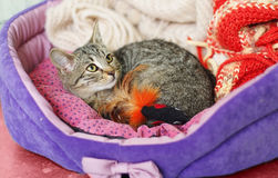 Tabby kitten in den Royalty Free Stock Photography
