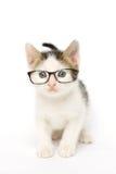 Tabby Kitten en verres Photos stock