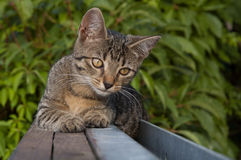 Tabby kitten on the fence Stock Photo