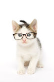 Tabby Kitten in Glasses. Studio photo on white of a white grey and brown tabby kitten (6 weeks old) wearing glasses Stock Photos