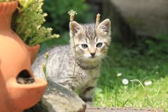 Tabby kitten on the grass. stock photography
