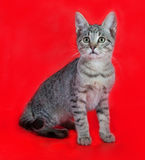 Tabby kitten with green eyes sitting on red Royalty Free Stock Images