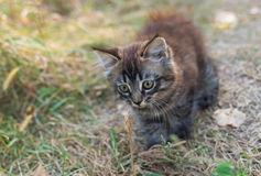 Tabby kitten having fun outdoor Stock Photo