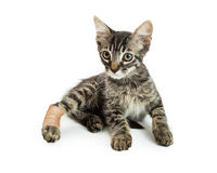 Tabby Kitten With Injured Paw Royalty Free Stock Photo