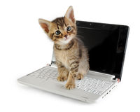 Tabby kitten on laptop Royalty Free Stock Photography