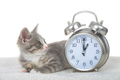 Tabby kitten laying on sheepskin blanket by clock, daylight savings concept. Gray and white kitten laying on sheepskin blanket next to a clock set for 1 o`clock royalty free stock images