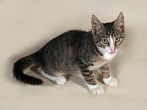 Tabby kitten licking on gray Royalty Free Stock Photos