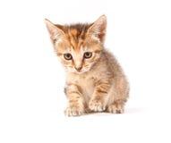 Tabby kitten looking up Stock Photo