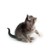 Tabby kitten looking up Stock Images