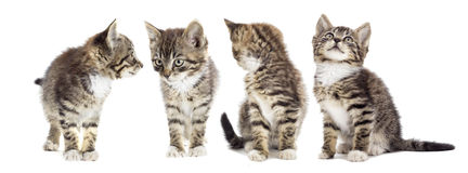 Tabby kitten looking Stock Photo