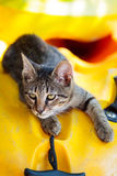 Tabby kitten lying in a kayak of Thassos Stock Photography