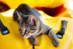 Tabby kitten lying in a kayak of Thassos Stock Photo