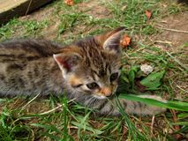 Tabby kitten lying outside. Little tabby kitten lying outside royalty free stock photo